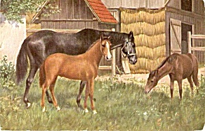 1907 Horses Throughbreds with Colt Postcard (Image1)