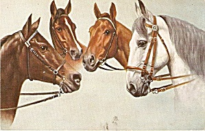 1907 4 Horses Looking At Each Other Postcard