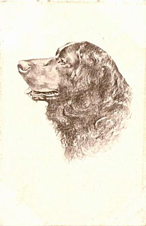 Vintage Artist Spaniel Dog 1906 Postcard (Image1)