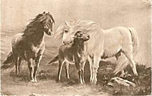 C W Faullner  Horses Grazing 1907 Postcard (Image1)