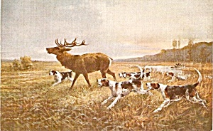 Vintage Dogs (Terriers) Chasing Deer 1907 Postcard (Image1)
