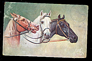 1907 3 Horses Looking At Each Other Postcard