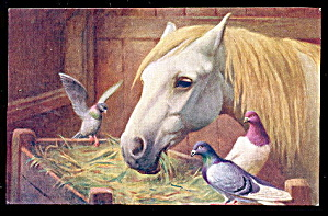 Horse Visiting With Birds J. Salmon 1908 Postcard
