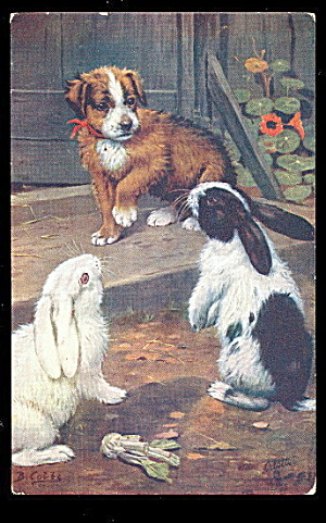 Tucks A Cobb Dog With Rabbits 1907 Postcard