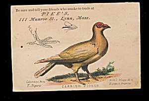 1880s Pike's Smoke Shop Mass Pigeon Trade Card (Image1)