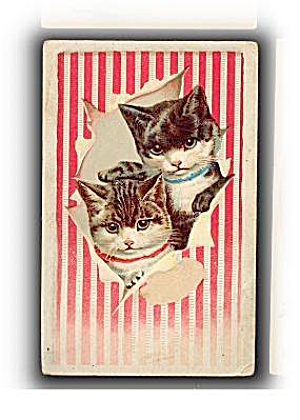 1895 Lions Coffee Cats/ Kittens Trade Card (Image1)