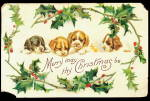 Merry Christmas Puppies with Holly 1910 Postcard