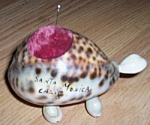Click here to enlarge image and see more about item 52007-4: Souvenir Sea Shell Turtle Pin Cushion