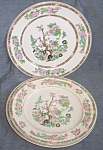 2 Onondaga Pottery Dinner Plates Indian Tree