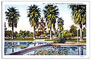 CALIFORNIA: Water Lilies & Palms, Southern CA Park (Image1)