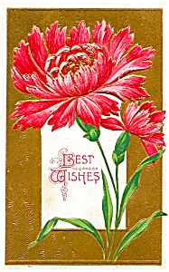 Lovely Red Aster, Best Wishes (Image1)
