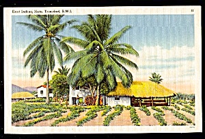 TRINIDAD, B.W.I., Grass Huts, East Indian (Image1)