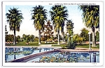 Click here to enlarge image and see more about item 1096: CALIFORNIA: Water Lilies & Palms, Southern CA Park