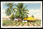 TRINIDAD, B.W.I., Grass Huts, East Indian