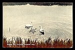 UNITED KINGDOM:  Swans & Cygnets, Radipole Lake