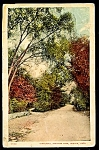MASSACHUSETTS:  Glen Road, Franklin Park, Boston 1910