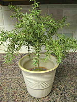 Ransbottom Stoneware Dragonfly Vase (Image1)