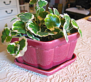 Burgandy Vintage Pot & Saucer (Image1)