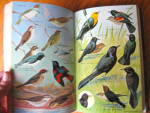 Click to view larger image of Birds of the East - lst Edition (Image4)
