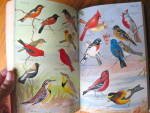 Click to view larger image of Birds of the East - lst Edition (Image6)
