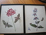 Click here to enlarge image and see more about item botanicals120603: Vintage Botanical Prints