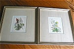 Click here to enlarge image and see more about item florals20625: Vintage Hirsch Floral Prints