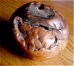 Click here to enlarge image and see more about item manzanita30622a: Burled Wood Pen Holder