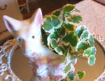 Click to view larger image of Scottie Dog Planter Vintage (Image2)