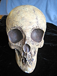 Click here to enlarge image and see more about item skull10721: Signed Statuary Skull