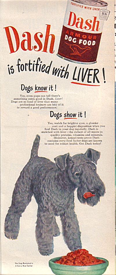 19492 Kerry Blue Terrier Dash Dog  Food Ad (Image1)