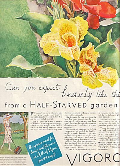 1932 VIGORO Stunning IRIS Garden Print AD (Image1)