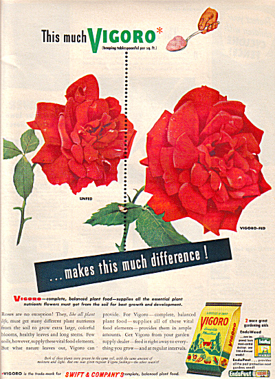 1949 VIGORO RED ROSE Lawn Food AD (Image1)