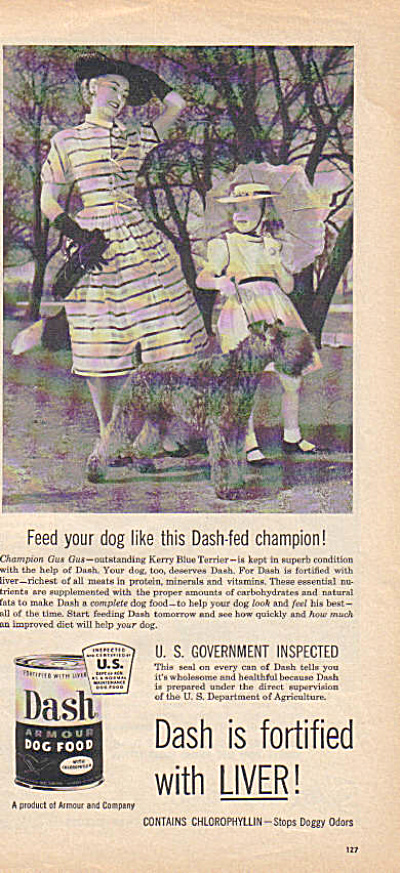 1954 Dash KERRY BLUE TERRIER Photo Dog Ad (Image1)