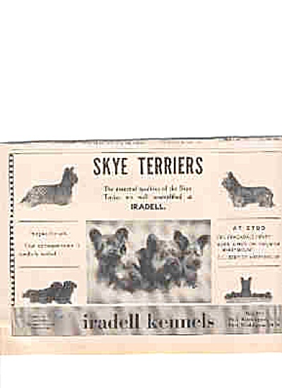 1939 Skye Terriers Iradell Kennels Ad (Image1)