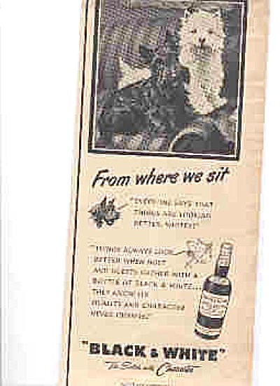 1950 Black And White Scotty Dogs WE SIT Ad (Image1)