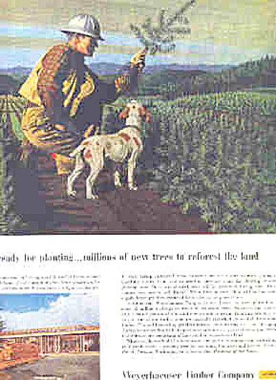 1958 Weyerhaeuser Timber Co Man/Dog Ad (Image1)