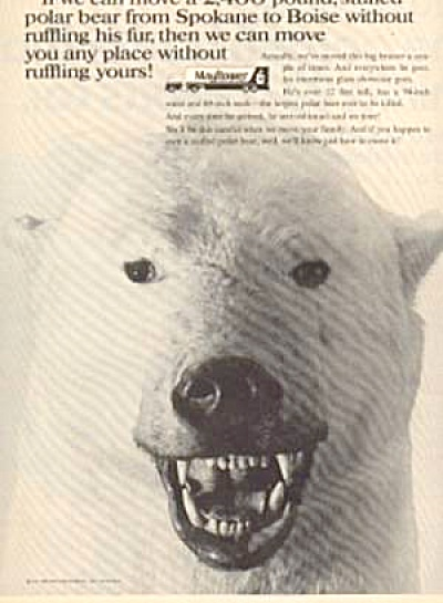 Mayflower Polar Bear Ad (Image1)
