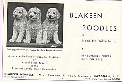 Blakeen Poodles ad 1936 (Image1)