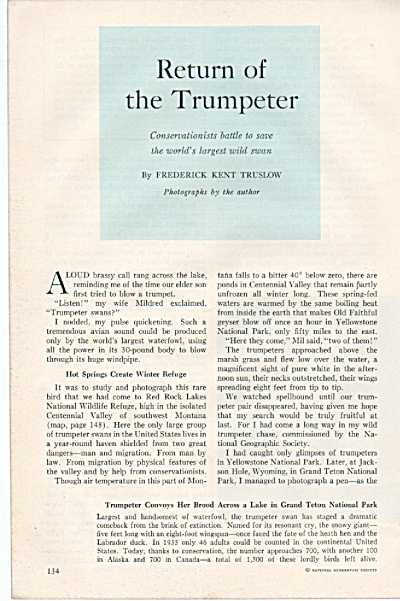 Return Of The Trumpeter Story 1960