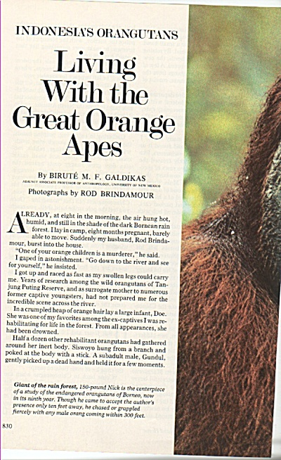 Living With The Great Orange Apes Story 1980