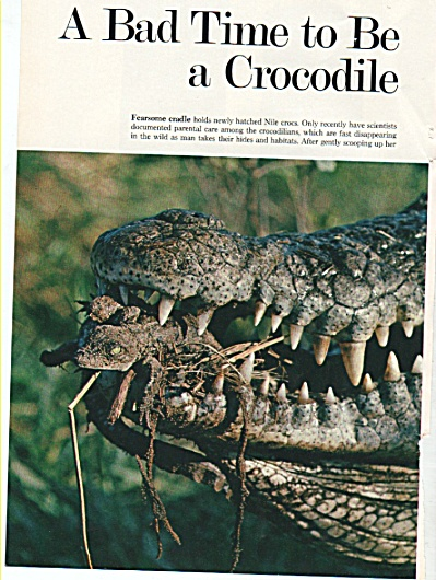 A Bad Time To Be A Crocodile - 1978