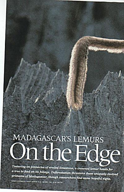 Madascar's LEMURS  story   1988 (Image1)
