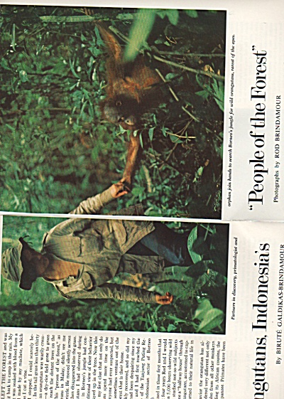 ORANGUTANS,  Indonesia's People of the Forest  1975 (Image1)