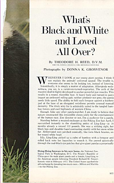 Giant PANDAS  story - 1972 (Image1)