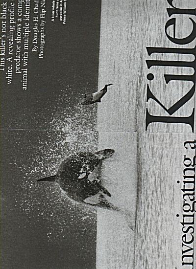 Investigating a Killer - Killer Whale 2005 (Image1)