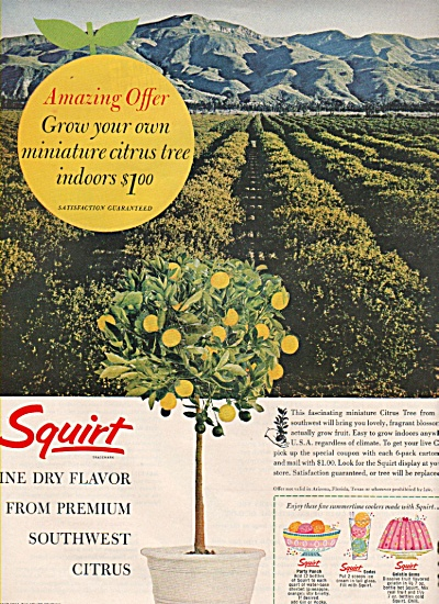Squirt drink ad 1963 (Image1)