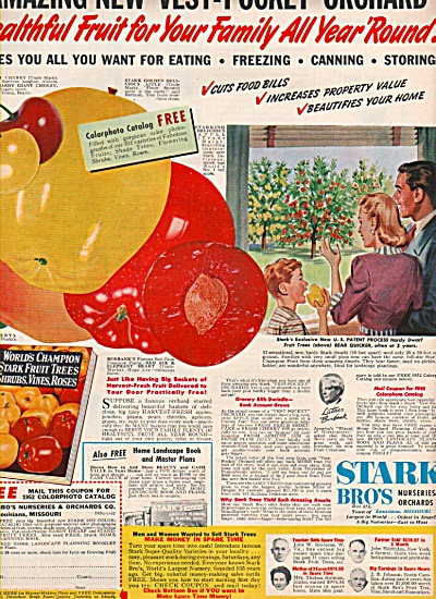 Stark bros. nurseries & orchards co. ad 1952 (Image1)