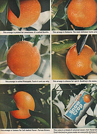 Snow crop orange juice ad 1963 (Image1)