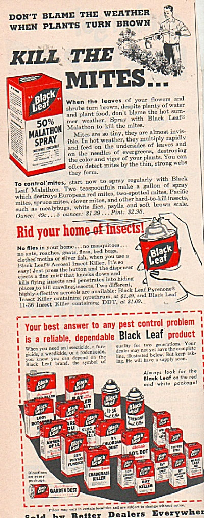 Black leaf insect sprays ad 1953 (Image1)