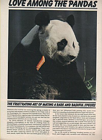 Love among the PANDAS  story 1981 (Image1)